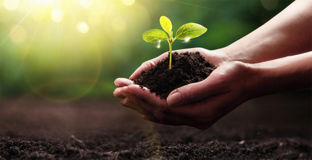 Hände halten Erdhaufen mit sprießender Pflanze